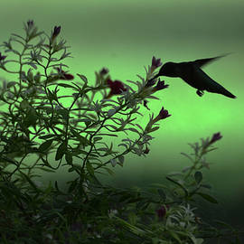 Audie T Photography - Hunting Nectar