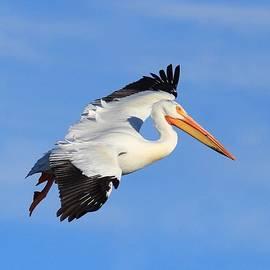 Lynn Hopwood - I beleive I can fly