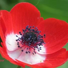 H B Vesseur - I Love Red