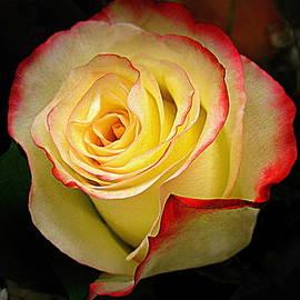 Bonita Brandt - I Love This Rose