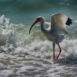 Don Columbus - Ibis In The Surf