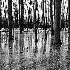 Debbie Oppermann - Iced Pond Black And White