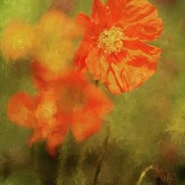 Eva Lechner - Iceland Poppies
