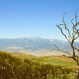 Ben and Raisa Gertsberg - Idyllwild Mountain View With Dead Tree