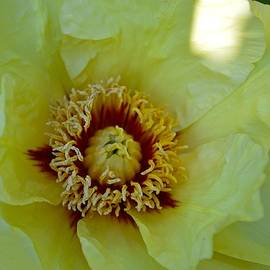 Sonali Gangane - Illuminating flora