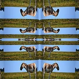 Anand Swaroop Manchiraju - Illusion