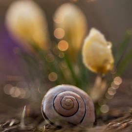 Jaroslaw Blaminsky - Impression with yellow crocuses and snail shell