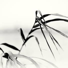 Tomasz Dziubinski - Impressions Monochromatic