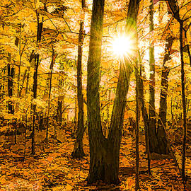 Georgia Mizuleva - Impressions of Forests - Sunburst in the Golden Forest