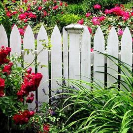 Angela Davies - In A Summer Rose Garden