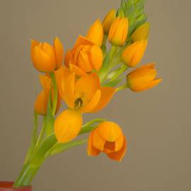 Alana Ranney - In Bloom