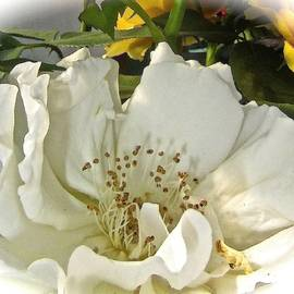 Elizabeth Tillar - In Memoriam