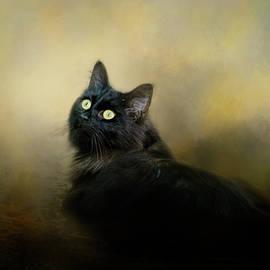 Jai Johnson - In The Garden Light Cat Art