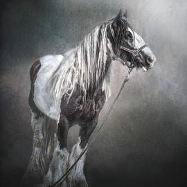 Brian Tarr - In The Misty Moonlight