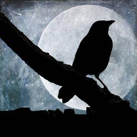 Cathy Kovarik - In The Moonlight