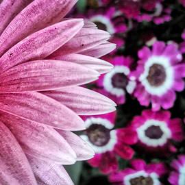 Bonnie Bruno - In the Pink