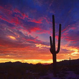 Saija  Lehtonen - In the Shadow of the Saguaro Sunset
