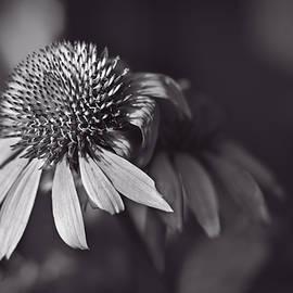 F Leblanc - Incandescent Beauty - Monochrome