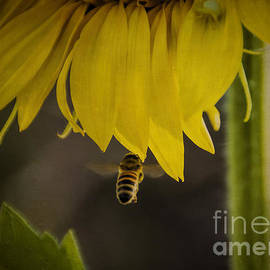 Janice Rae Pariza - Incoming Bumblebee