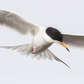 Ruth Jolly - Incoming tern