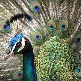 Sharon Mau - Indian Blue Peacock Puohokamoa