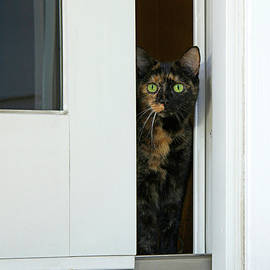Sheila Fitzgerald - Inside Tortie Cat looking outside