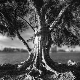 Marvin Spates - Intercoastal Pine