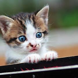 Serhii Kucher - Interested Kitty