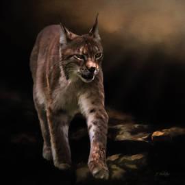 Jordan Blackstone - Into The Light - Lynx Art