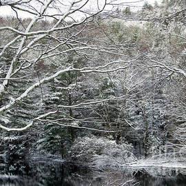 Linda Troski - Into the Winter Woods