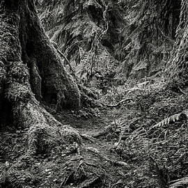Stephen Stookey - Into The Woods - Black and White