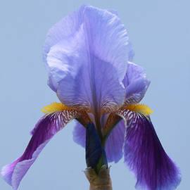 Allen Beatty - Iris 17