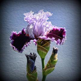 Allen Beatty - Iris 41