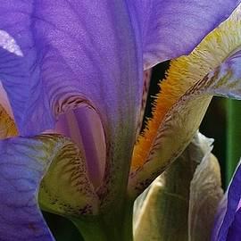 Bruce Bley - Iris Abstract 1