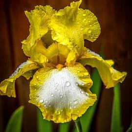 Robert Bales - Iris After The Rain