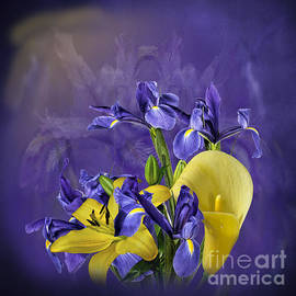 Shirley Mangini - Iris and Lilies