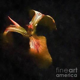 Andrea Kollo - Iris Art