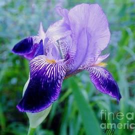 Marsha Heiken - Iris Beauty