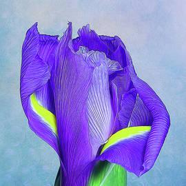 Tom Mc Nemar - Iris Flower
