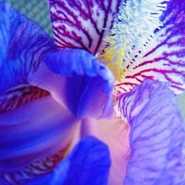 Honey Behrens - Iris in Blue