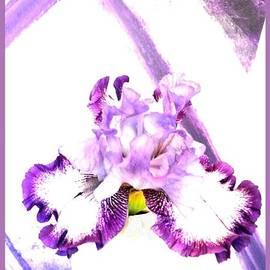 Marsha Heiken - Iris in Magenta Bloom