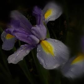 Richard Cummings - Iris in the Rain