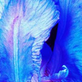 Honey Behrens - Iris Inside