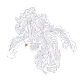 Anne Norskog - Iris Line Drawing