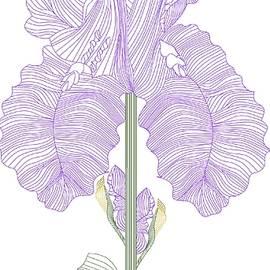 Anne Norskog - Iris Line Drawing Two