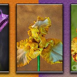Shirley Mangini - Iris Trytypch
