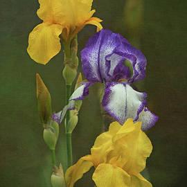 Angie Vogel - Irises