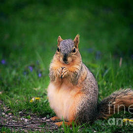 Laura Birr Brown - Squirrel Tightly Holding Her Food