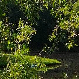 Tonya Merrick - Island in a Stream