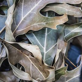 Jessica Manelis - It Happens In Autumn